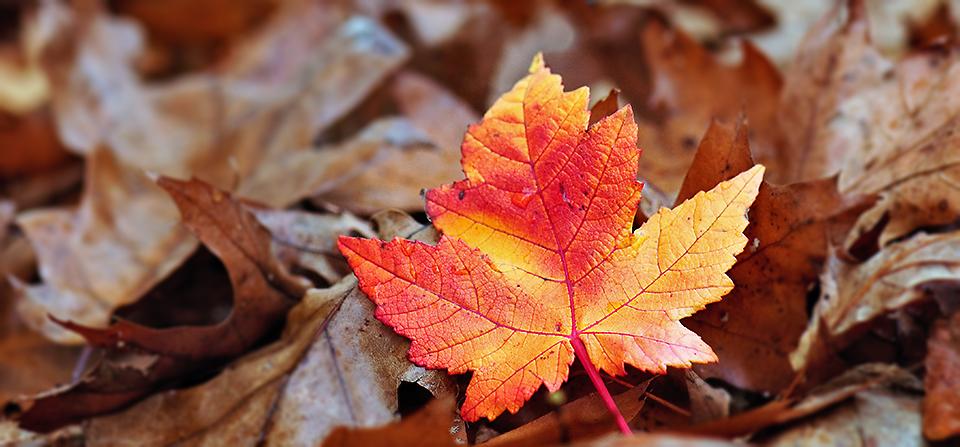 Fall Colour