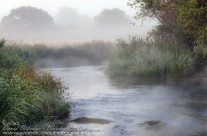 River Frome Meanders Through Morning Mist