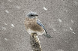 Woodland & Song Birds