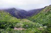 The Mountain Rainforest Landscape of Maui
