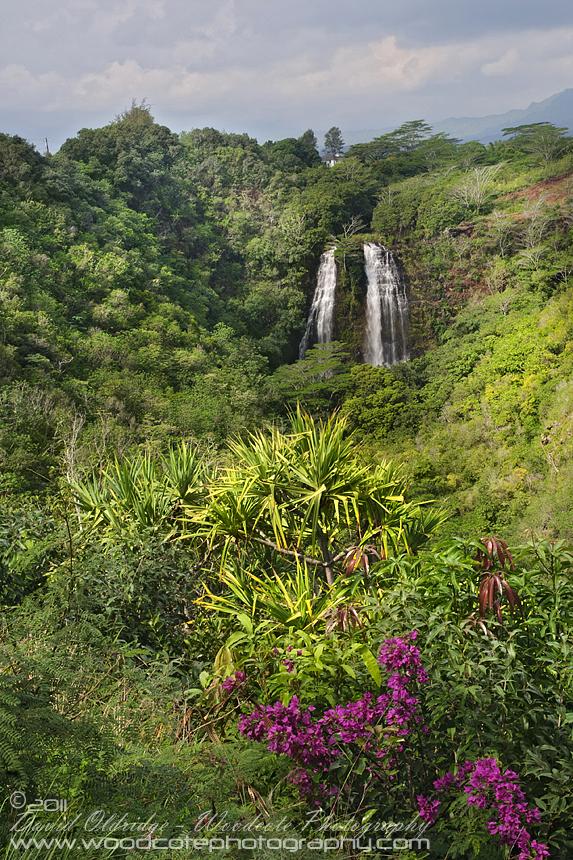 Opaka Falls on the island of Kauai