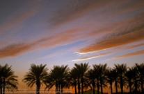 Palm Fringed sunset