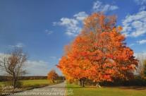 Fall in Kent