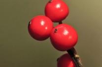 Early Winter Berries