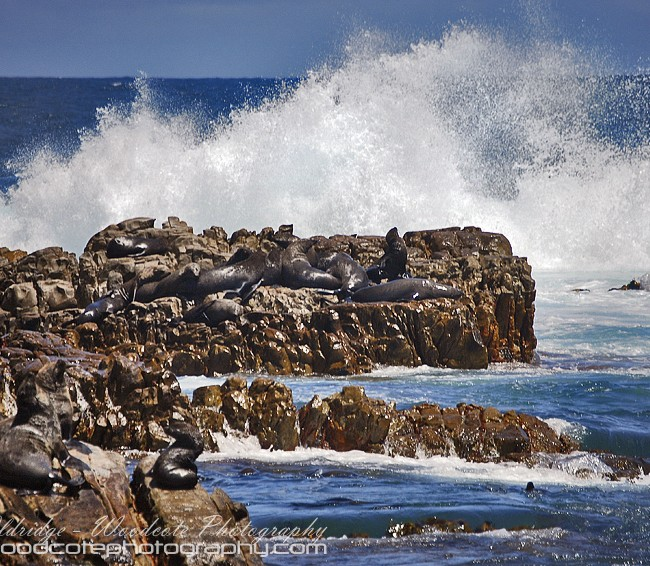 The surf lashing the home of the Cape Fur Seals