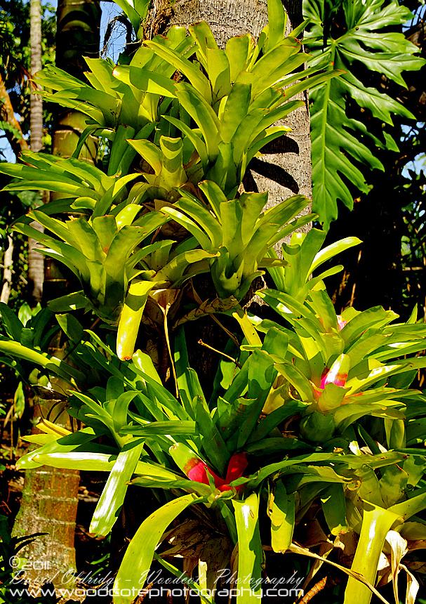Rainforest Epiphytes