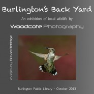 """Burlington's Back Yard"" Exhibition – October 2013"