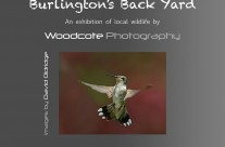 """Burlington's Back Yard"" Exhibition – October 2013"