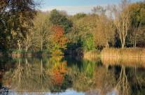 Early Autumn Colour
