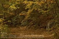 Woodland Path in Fall