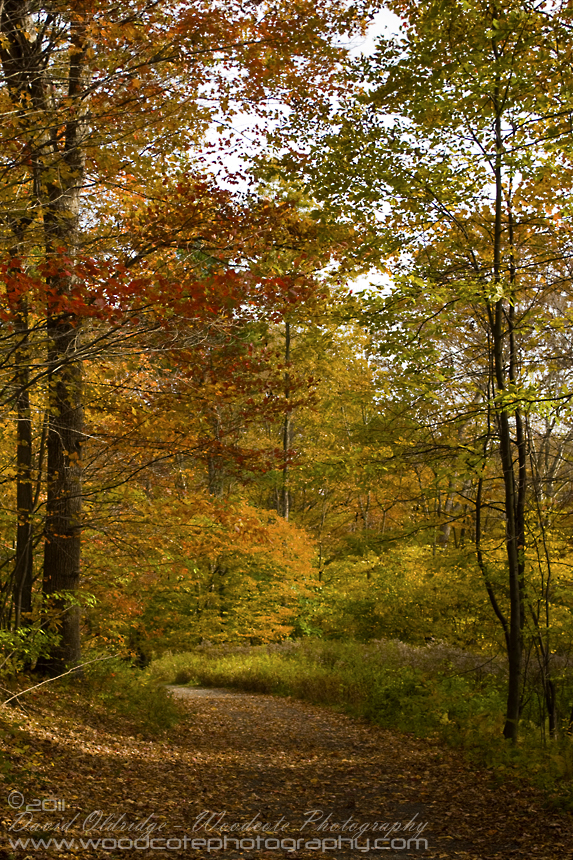 Connecticut Forest Trail in the Fall